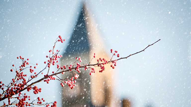 Red berries in focus as snow falls in front of McGraw tower