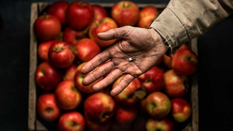 A dirt covered hand holds a microchip over a crate of apples